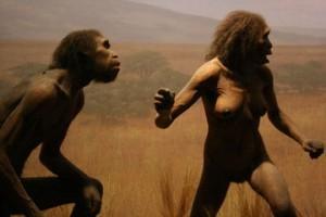 360px-Homo_erectus_4